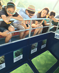 Centennial College Students Observe the Marine life in a Glass-bottomed Boat